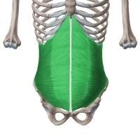 Mavetræning af Musculus Transversus Abdominis